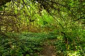 stock photo of backwoods  - Small Pathway going trough the forest outdoors - JPG