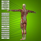 image of male body anatomy  - Concept or conceptual 3D male or human anatomy - JPG