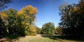 Autumnal beech trees