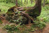 Animal de madera