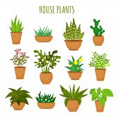 plant poster