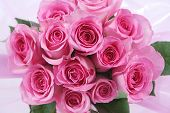 picture of one dozen roses  - One dozen pink roses in a pink wrap - JPG