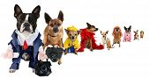 foto of mexican-dog  - a spoof on business images but with dogs - JPG