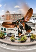 image of basset hound  - funny dog card - JPG