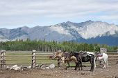 Three Saddled-up Horses Wait For Their Riders In The Coral With A Rocky Mountain Backdrop.