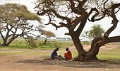 OLDUVAI GORGE, TANZANIA, DECEMBER 23, 2011, TWO MAASAI MEN PLAYING A BOARD GAME UNDER A TREE