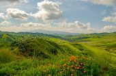 Poppies And Green Hills Line The Trails In Spring At Chino Hills Park poster
