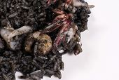 Rice With Squid Ink
