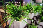 Plant Potted Plant . Office Or Home Green Plant. White Square Pot. Modern Interior Design. Landscapi poster