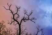 Mysterious Dramatic Landscape In Cold Tones - Silhouettes Of The Bare Tree Branches Against Color To poster