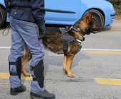 Dog Canine Unit Of The Police To Identify The Explosives During An Anti-terrorist Operation poster