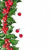 Weihnachten-Grenze der Stechpalme Ilex isoliert auf weißem Hintergrund