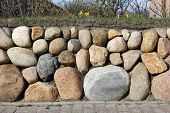 Frisian Stone Wall Planted With Wild Daffodil And Ramana Roses
