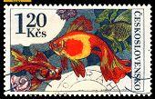 Vintage  Postage Stamp. Aquarium  Fish Carassius Auratus.
