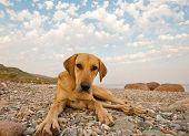 Playful Dog On The Beach