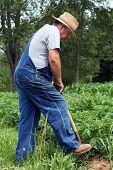Digging For Veggies