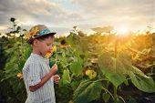 child in sunflowers
