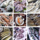 Set Of Images Showcases The Fishmarket