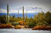 Desierto de nieve