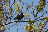 black bird on a branch of a tree