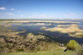 Danubian Delta landscape - Parches