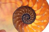 picture of oceanography  - Backlit inside of nautilus shell - JPG