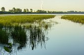 stock photo of marshes  - Various aquatic plants thriving in a swampy marsh in Northwest Ohio - JPG