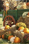 Colorful Fall Pumpkin Display