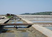 Salt Crystallization Field, Seca, Slovenia