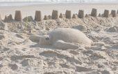 Sea Turtle Sand Art
