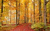 Autumn Forest In October
