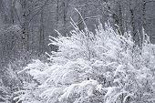 Winter Graphics.