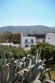 Cactus And House In Greece