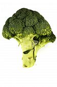 Fresh Cabbage Broccoli On A White