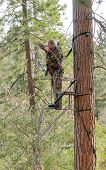 Bow hunter in a ladder style tree stand with bow at full draw, demonstrating good safety by using a safety harness