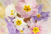 stock photo of heartwarming  - spring flowers  - JPG