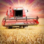 Combine harvesting wheat against colorful sunset. Harvest home and end of summer concept.