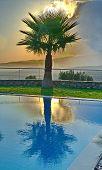 Palm Tree In An Aegean Sunrise