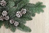 Winter and christmas snow covered fir leaf and pinecone background over oak.