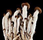 Mushrooms On A Black Background