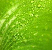 Green leaf in nature