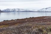 stock photo of arctic landscape  - Arctic landscape in Greenland in late summer and early autumn with snowy mountains and ocean - JPG
