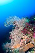 Various corals deep underwater