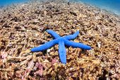 Starfish on a dead coral reef