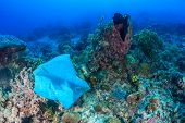 Plastic Bag On Coral Reef