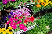 Variety Of Colorful Flowers In Flower Shop