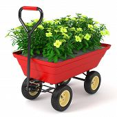Flowerbed In Hand Trolley.