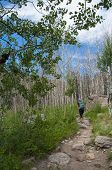 Female Hiker On The Cub Lake Trail In Rocky Muntain National Park