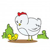 cartoon illustration of a hen and two chickens