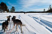 stock photo of husky  - Huskies pulling sleds through the frozen wastes of northern Sweden - JPG